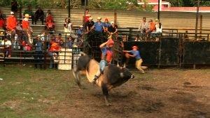 Las montas de toros emocionan a los asistentes a las fiestas patronales. Foto: V. Pérez.