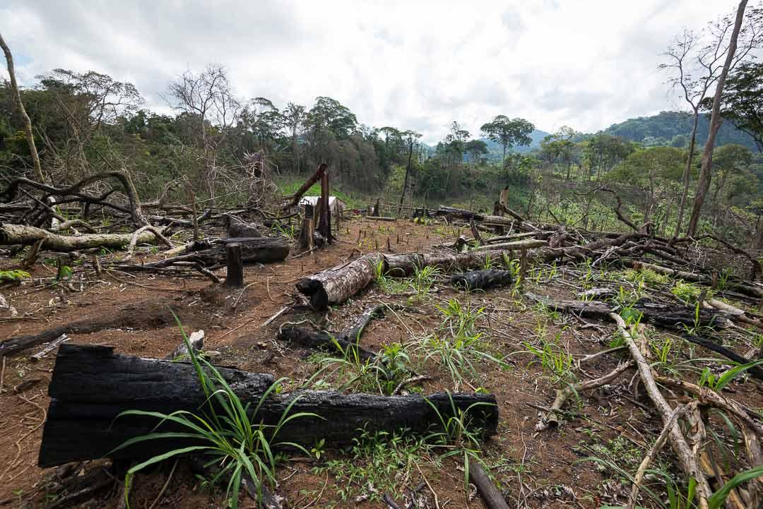 Destrucción ambiental. Foto: tomada de Confidencial.