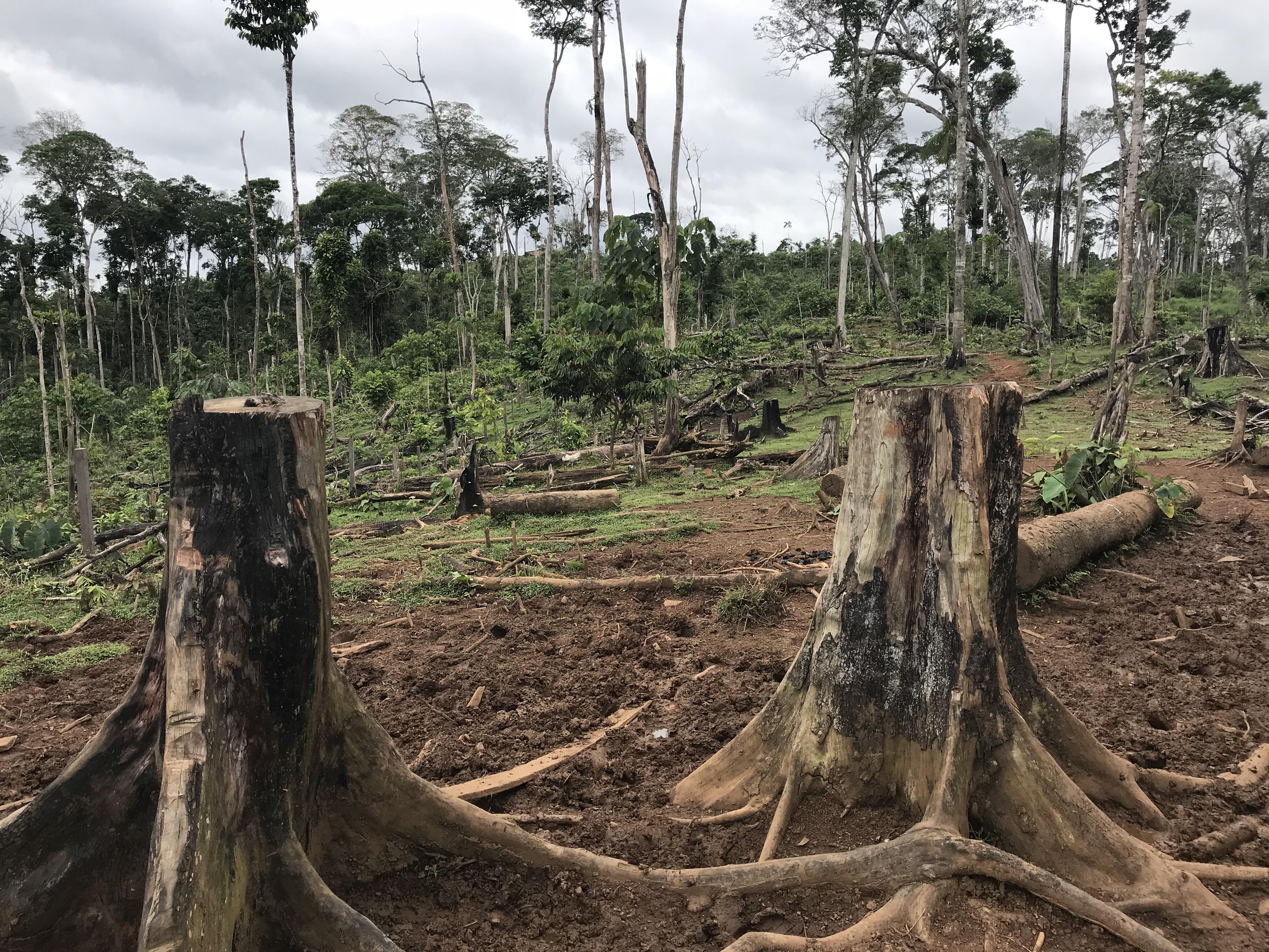 Miles de árboles tendrían que ser cortados para la construcción de una carretera que propone el Gobierno municipal de El Castillo. Foto: Onda Local
