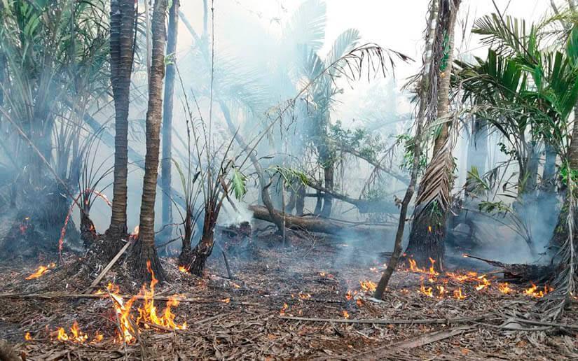 Más de 6,300 hectáreas calcinadas en incendio en reserva Indio Maíz. Foto: 19 Digital