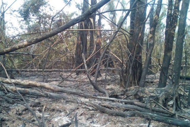 Vocera del Gobierno, Rosario Murillo informó que el incendio en Indio Maíz fue extinguido. Foto La Prensa