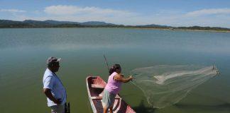 Afectaciones de reforma fiscal alcanzan a pescadores artesanales. Foto: La Prensa