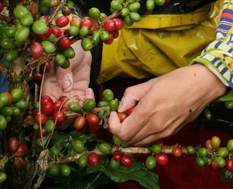 Firman Convenio para garantizar mano de obra nicaragüense en Costa Rica. Foto: Internet.