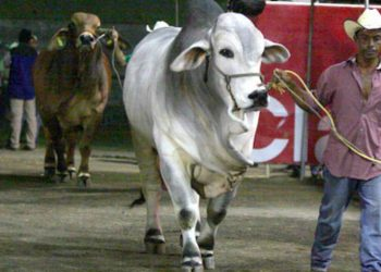 Suspenden la Feria Nacional Agropecuaria por pandemia del coronavirus