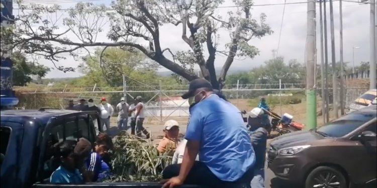 Captura de la transmisión donde la Policía detiene a vendedores de hojas de eucalipto