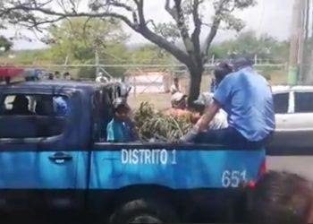 Policías llevándose a los ciudadanos vendedores de hojas de eucalipto junto con las ramas de los árboles