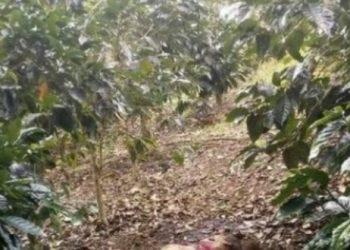 Encuentran mujer asesinada en cafetales de Jinotega. Foto: Radio Jinotega.