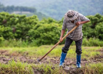 UPANIC advierte que reforma a la Ley del Consumidor traerá graves afectaciones a productores