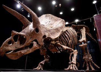 Compran esqueleto de dinosaurio por 7,6 millones de dólares